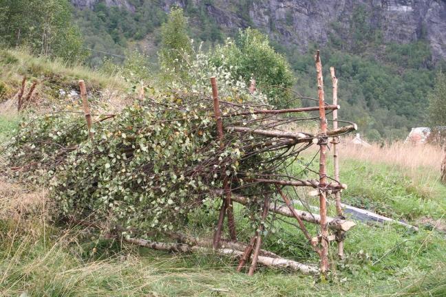 brake&risgardprosjekt Knut 096